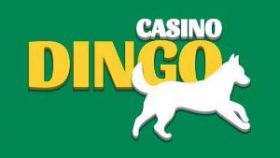 registro en dingo casino